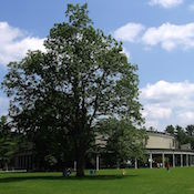 1280px-Tanglewood_Music_Shed_and_Lawn,_Lenox,_MA